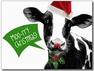 Moo-rry Christmas card