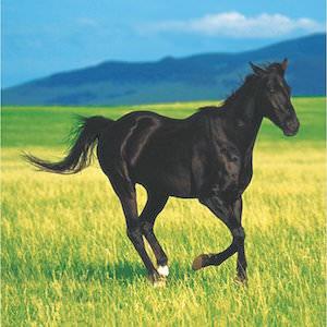 Black Horse Paper Napkins