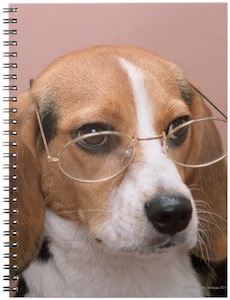Beagle Wearing Glasses Spiral Notebook