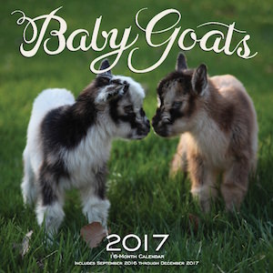 2017 Baby Goats Wall Calendar
