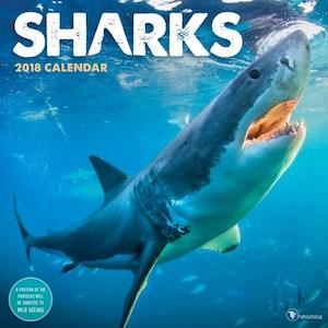 2018 Sharks Wall Calendar