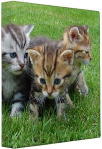 Kittens In The Grass Binder