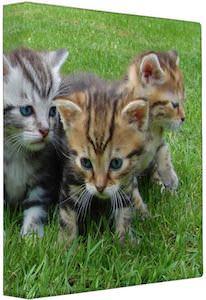 Kittens In The Grass Binder