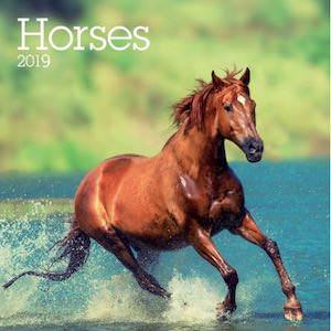 2019 Horses Wall Calendar