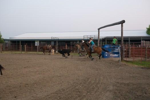 Team Roping Training - ein erster Vorgeschmack auf das Calgary Stampede
