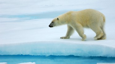 ice-king-polar-bear (11)