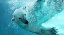 ice-king-polar-bear (12)
