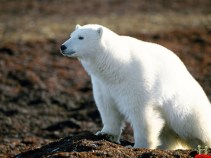 ice-king-polar-bear (2)