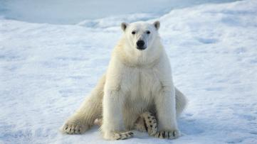 ice-king-polar-bear (3)