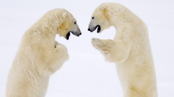 ice-king-polar-bear (6)
