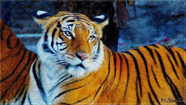 tiger-wallpapers-stugon.com (1)
