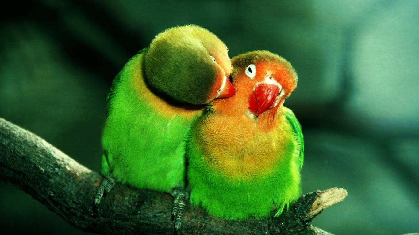 15+ beautiful birds wallpaper collection [hd edition] - stugon