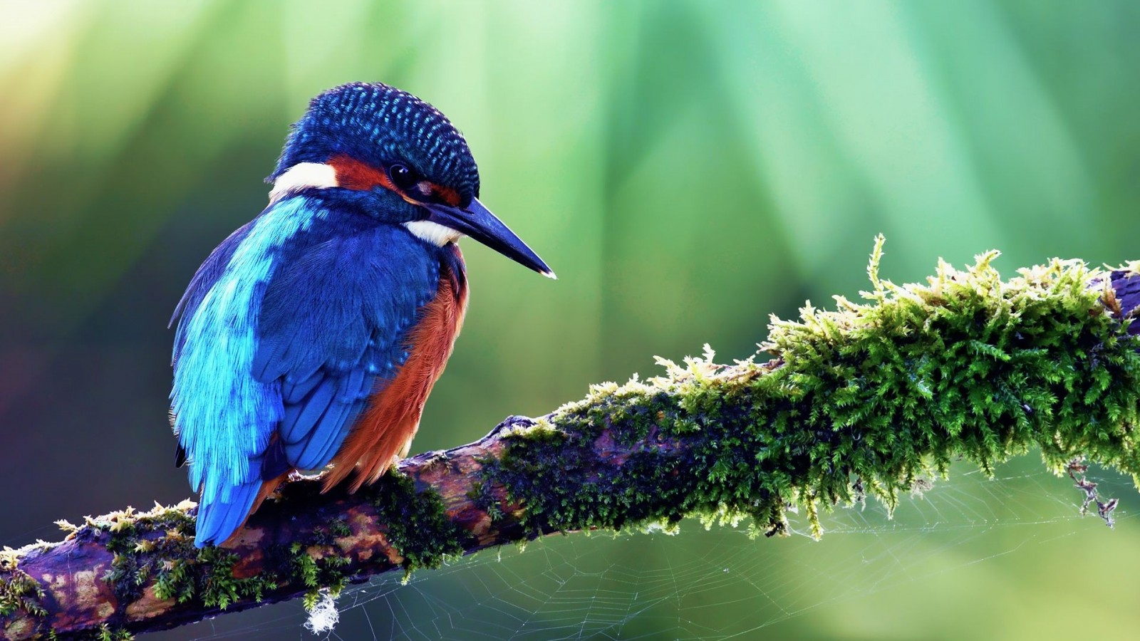 15 beautiful birds wallpaper collection hd edition stugon - Hd pics of nature with birds ...