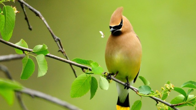 bird-wallpapers-stugon.com (7)