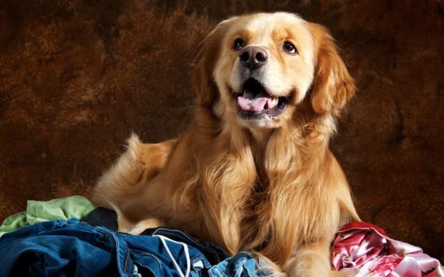 dog-wallpaper-collection-stugon.com (13)