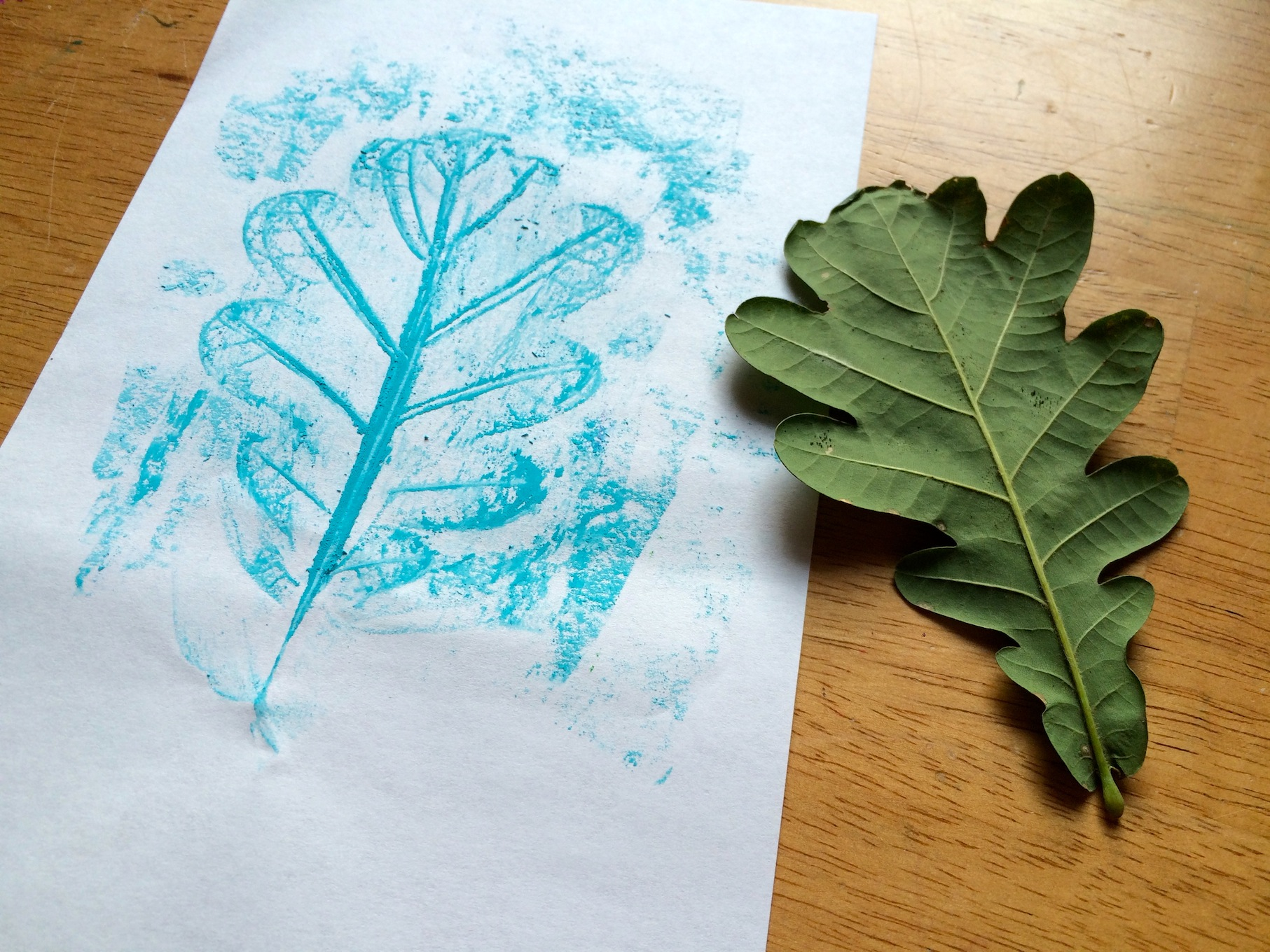 Tree Identification For Kids My Leaf Book Sturdy For
