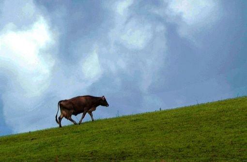 Ländliche Idylle: Eine Kuh läuft übers saftig grünes Gras unter blauem Himmel. Foto: dpa