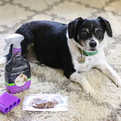 How to Keep Your Home Clean and Stain-Free with Pets this Fall