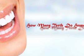 How-Many-Teeth-Do-Humans-Have