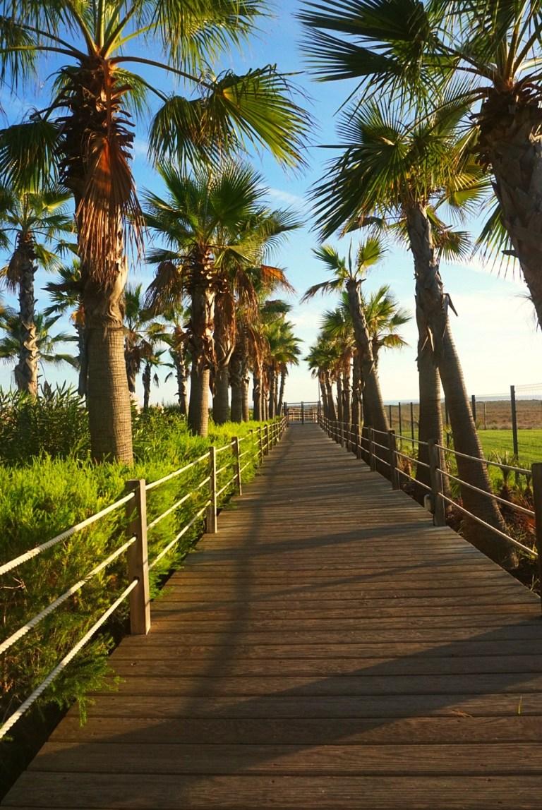 Palm trees in Vida Mar Portugal