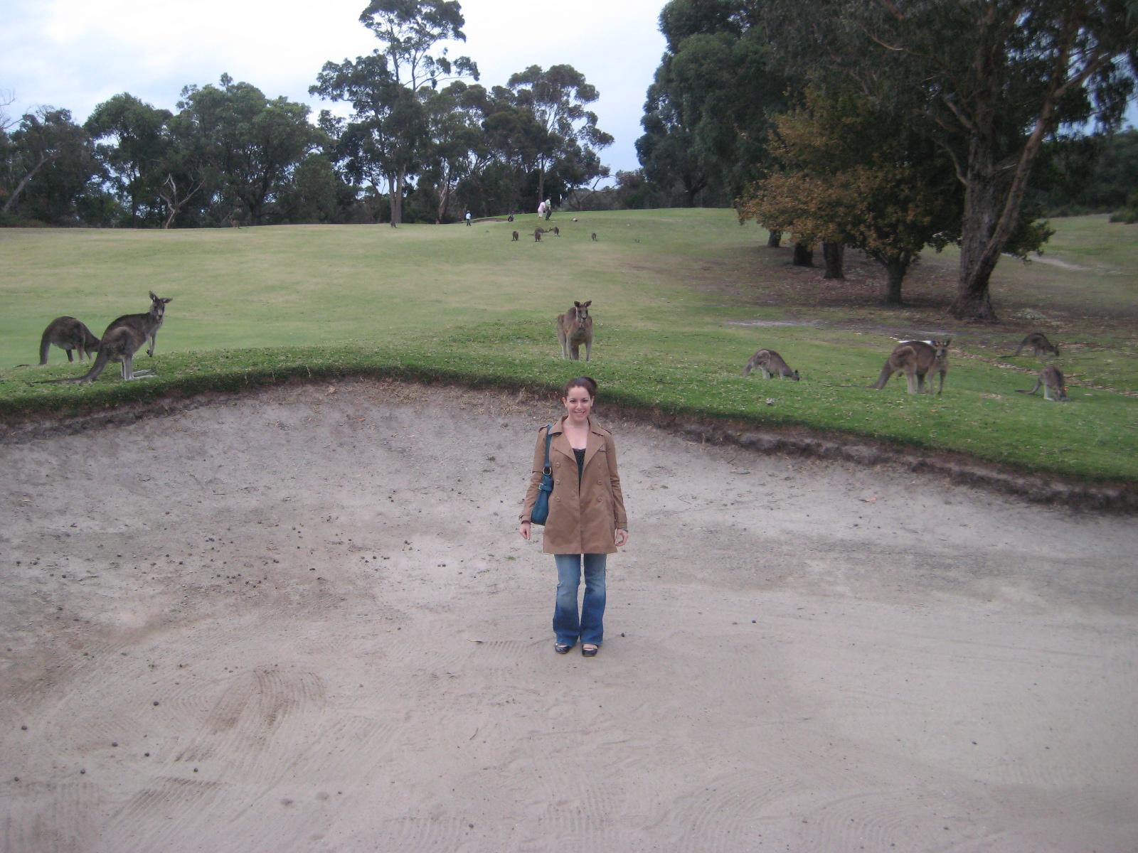 great ocean road kangaroo