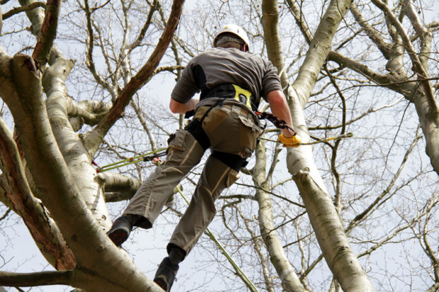 Characteristics Of A Reliable Tree Removal Company