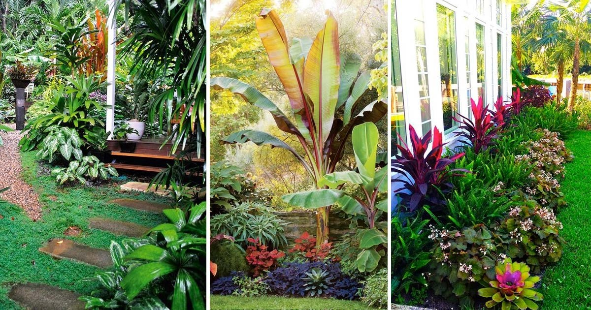 Top Tropical Backyard Garden Ideas - Stylendesigns on Tropical Small Backyard Ideas id=70492