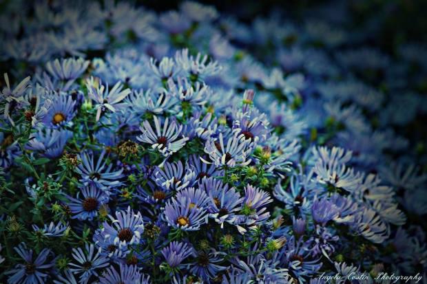 angela constin flowers