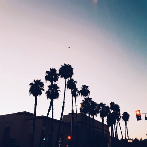 west-hollywood-palms