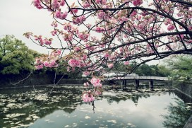 Japan Guide: A Photo Diary Of A Very Photogenic Country 7