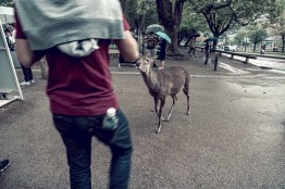 Have You Seen This Japanese Deer City? A Photo Diary of Nara, Osaka and Kyoto 7