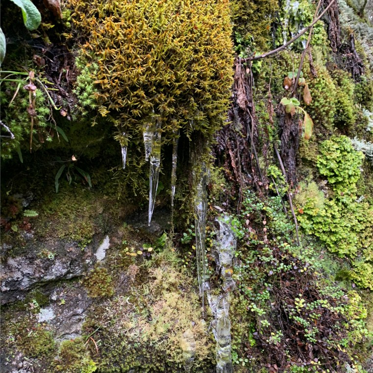 Moss and lichen grow easily in the pure air of the Rees Valley, New Zealand