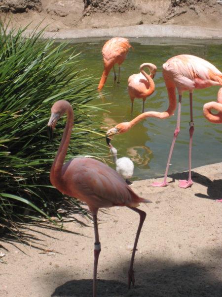 San Diego Zoo centennial celebration #sdzoo100 #sandiego #zoo