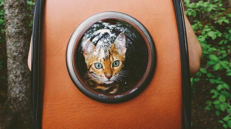 Suki Cat Instagram