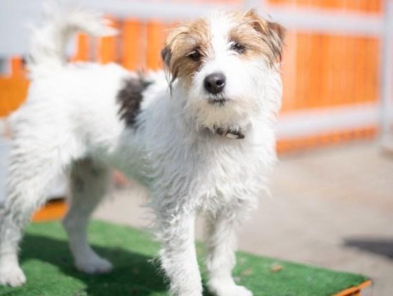 come prenotare online l'asilo per cani