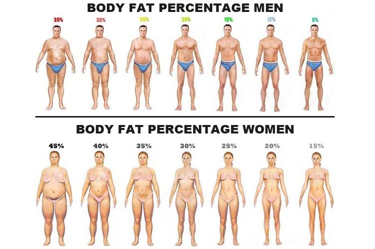 Kroppsfett procent deffa