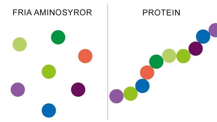 Aminosyror protein