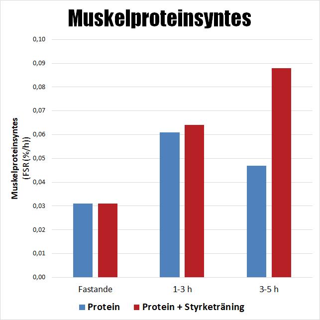 Muskelproteinsyntes jämförelse protein och styrketräning