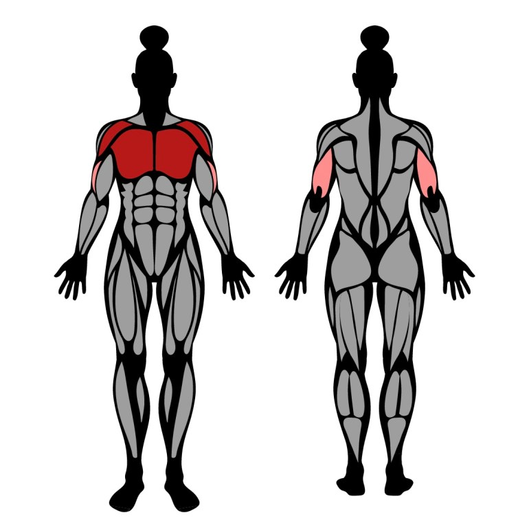 Muskler som tränas av övningen bänkpress med fötterna uppe