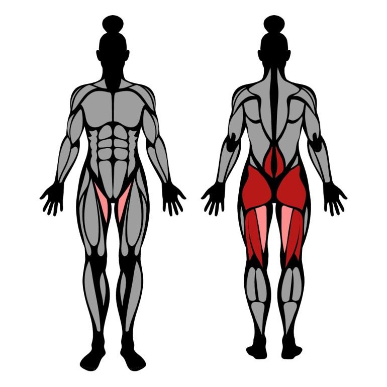 Muskler som tränas i övningen good morning