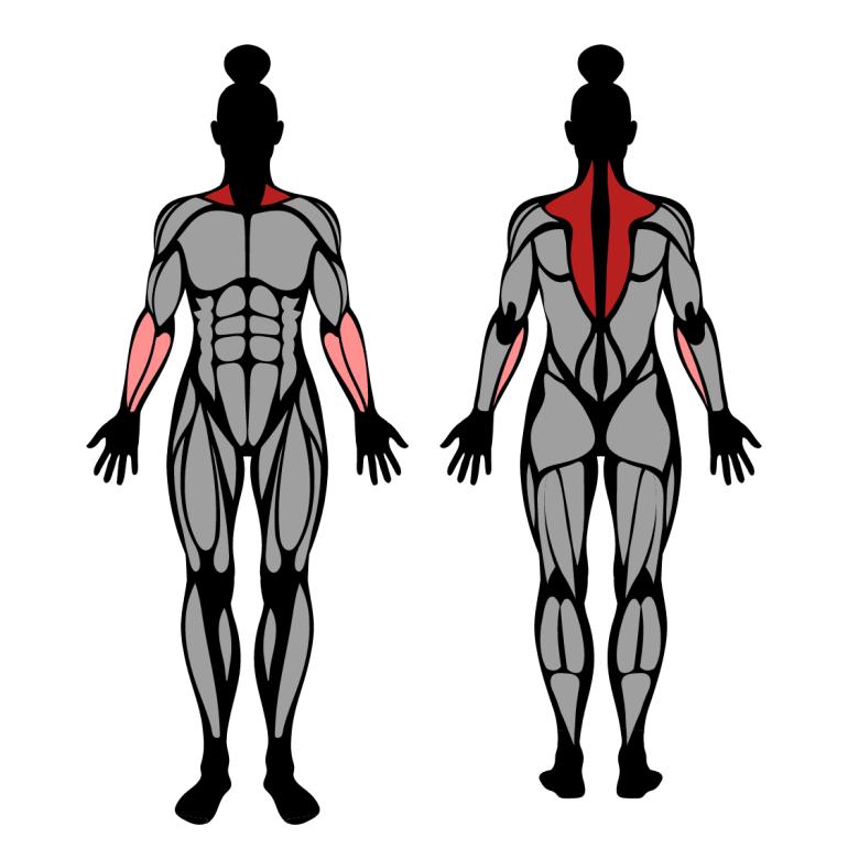 Muskler som tränas av Shrug med hantlar