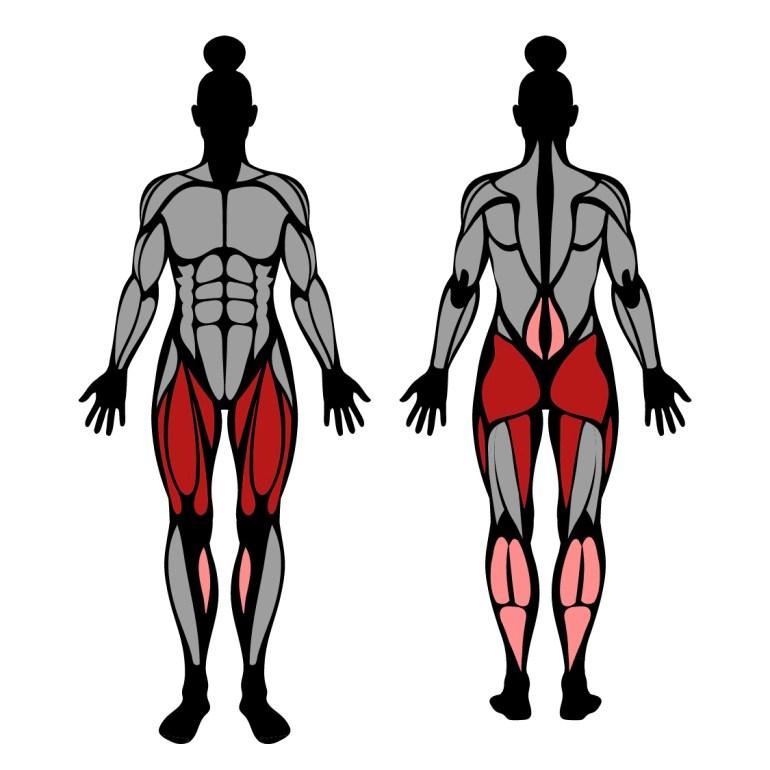 Muskler som tränas av goblet squat