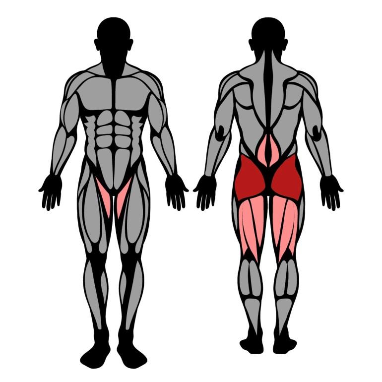 Muskler som tränas av höftsträckning med band