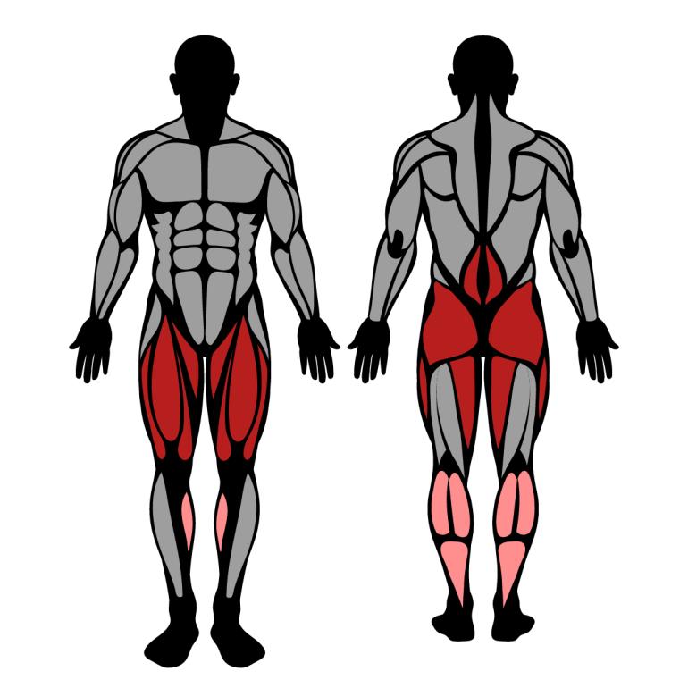Muskler som tränas av knäböj i smithmaskin