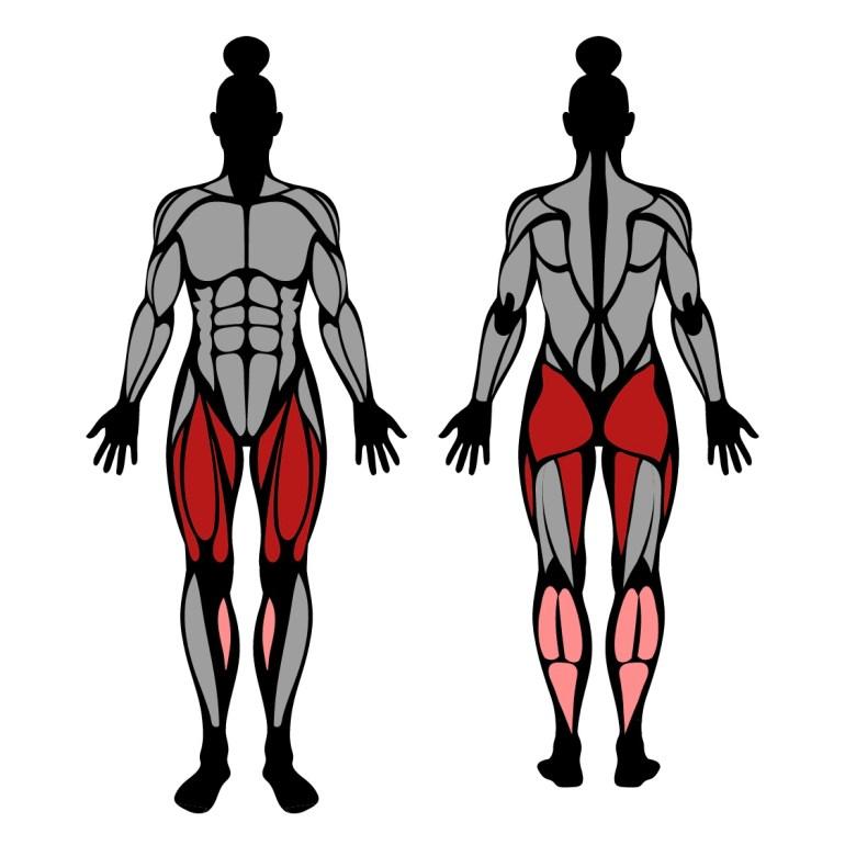 Muskler som tränas av knäböj med bara kroppsvikten