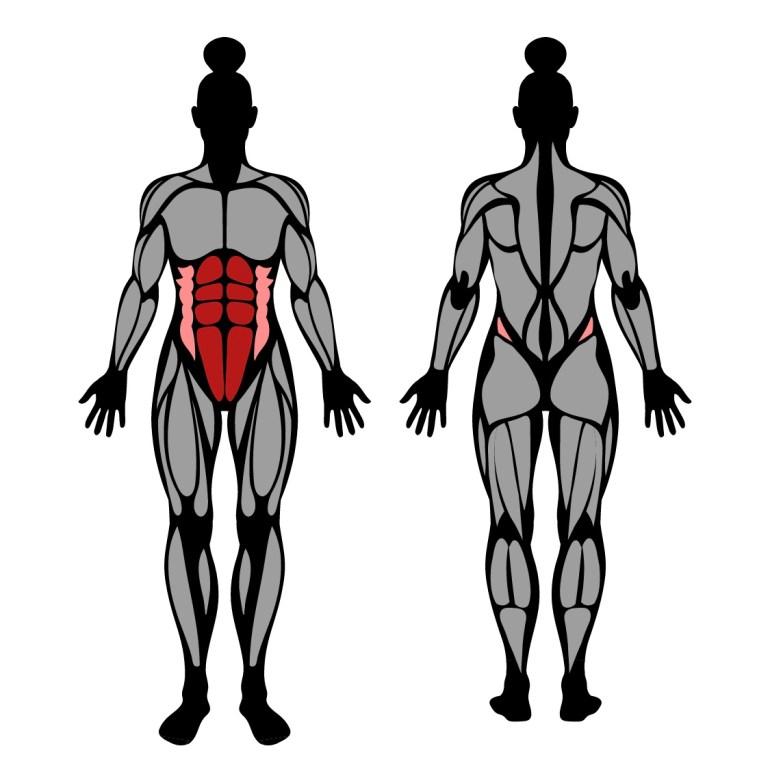 Muskler som tränas av knästående maghjul