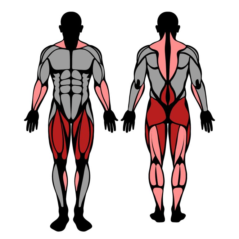Muskler som tränas av övningen hängvändning