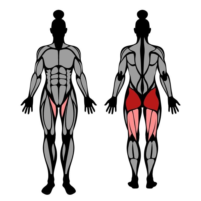 Muskler som tränas av övningen hip thrust