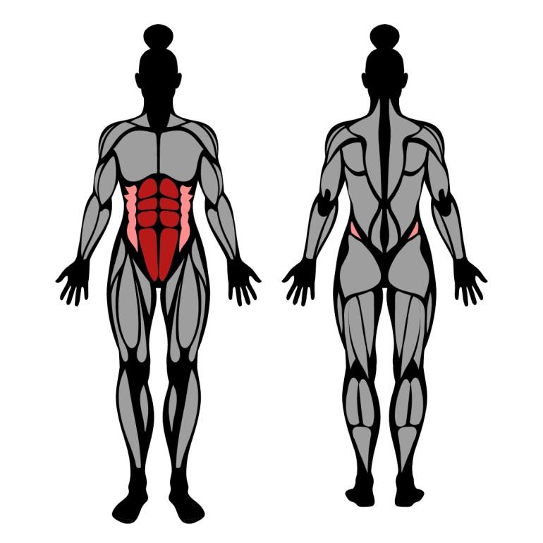Muskler som tränas av plankan