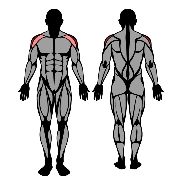 Muskler som tränas av sidolyft i maskin